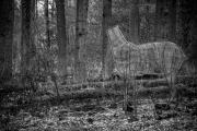 29jernst-20140413-66935-Bearbeitet-2-b.jpg