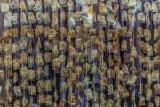 4jernst-20130116-47600.jpg